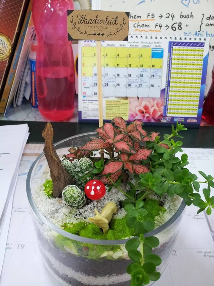 My First Blog!: Terrariums~ Seni taman dalam kaca