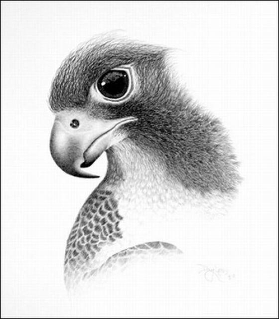 Astonishing Pencil Sketches By Doug Landis (12 pics) - Izismile.com