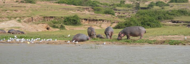 Experience the Wildlife of Queen Elizabeth National Park.
