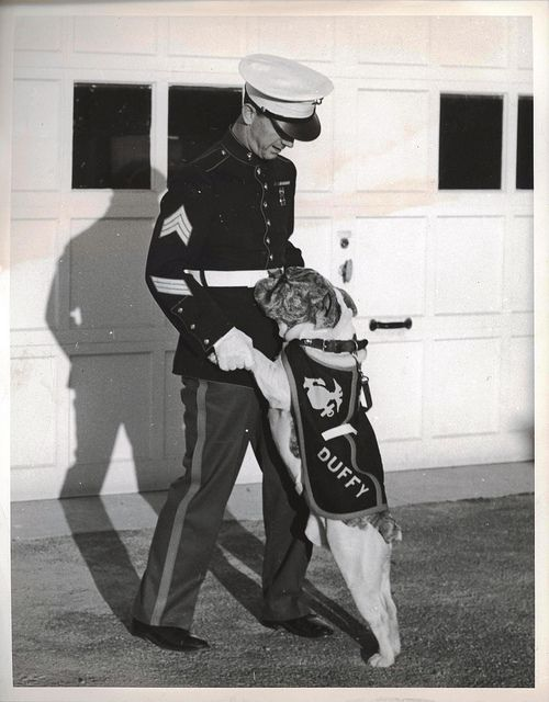 "Duffy, ca. 1941-1945 by Marine Corps Archives & Special Collections. ""Duffy, white and brindle bulldog, will soon arrive at San Diego, California, where he will be the mascot of the U.S. Marines at the West Coast base. He is shown bidding farewell to Sergeant Earl V. Swift on the eve of his departure from Philadelphia. Duffy is a half-brother of Jiggs IV, official mascot of the Marine Corps, stationed at Quantico, VA. The dog is a gift from Dr. and Mrs. Frederic James, of Quaker City."""