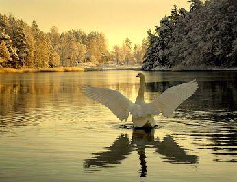 Winter in Finland! Google+