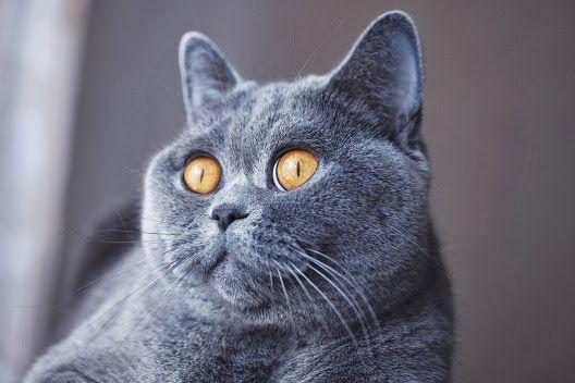 Dlaczego źrenice kotów zwężają się?