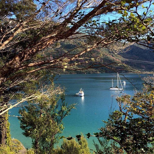 Walking the Queen Charlotte Track in the Marlborough Sounds is a great way to experience the true beauty New Zealand has to offer!
