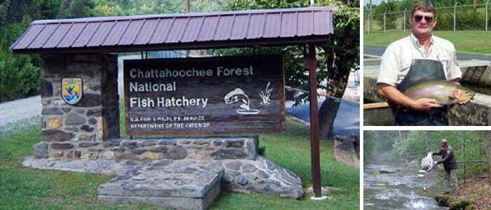 Chattahoochee National Fish Hatchery - Blue Ridge WMA, Georgia.