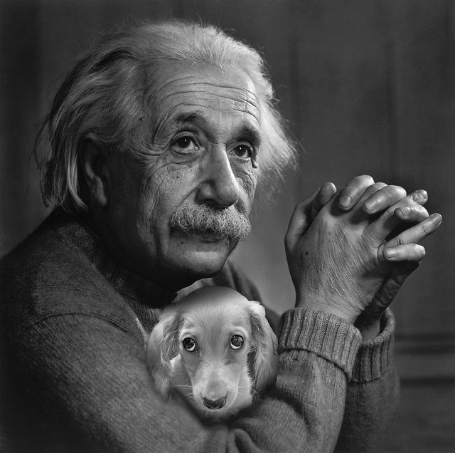 Einstein and a dachshund - photo shop, #dachshund #teckel #doxie