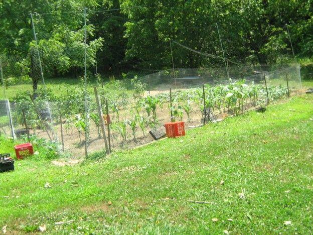 17 Best Ideas About Deer Fence On Pinterest Fence Garden Garden Fences And Vegetable Garden