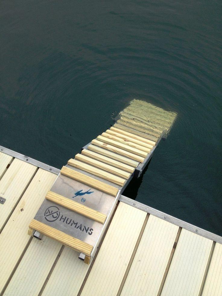 dog ladder for lake