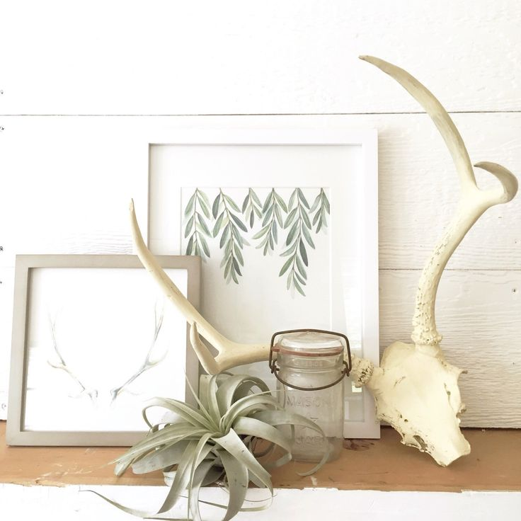 17 Best Ideas About Olive Branches On Pinterest