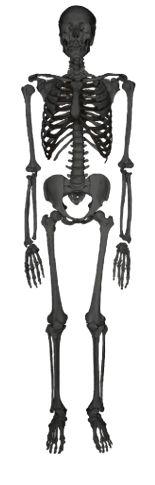 Eskeletons è un sito web realizzato dal Dipartimento di Antropologia presso l' Università del Texas ad Austin; offre modelli interattivi di scheletri di mammiferi. Selezionare un modello dal menu sulla home page e cliccare su qualsiasi osso del modello per vederlo in dettaglio.