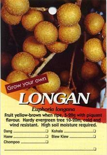 Longan Euphoria Longona Buy Longan Fruit Yellow-brown When Ripe