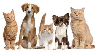 Adopting A Pet? Five Ways To Prepare Your Family and Home