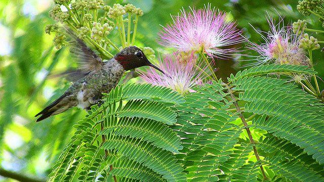 [New Blog] What Does Google's Hummingbird Update Mean for Blogs? http://asblog.co/1hSzFwQ @Courtney Gordner