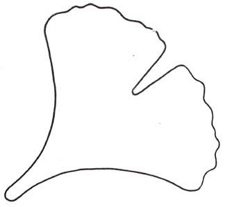 ginko leaf cookie cutter (ecran.com)