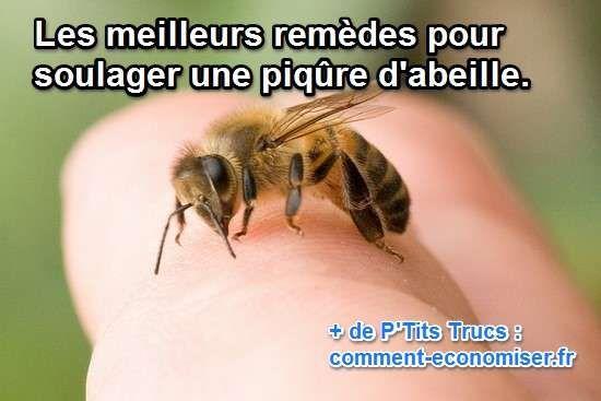 Voici les 14 meilleurs remèdes maison pour soulager la douleur rapidement. Nous avons aussi sélectionné des conseils intéressants pour éviter de vous faire piquer. Découvrez l'astuce ici : http://www.comment-economiser.fr/14-remedes-maison-pour-soulager-une-piqure-d-abeille.html?utm_content=bufferc34e7&utm_medium=social&utm_source=pinterest.com&utm_campaign=buffer
