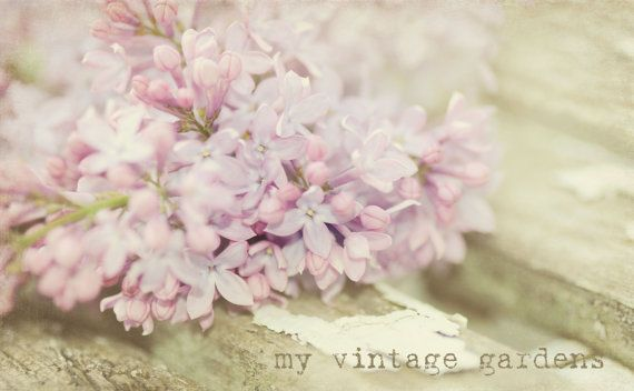gorgeous lilacs on a vintage bench in my garden This measures 5 x 7. Signed on the back.    ~~ Please use the drop down menu to choose your