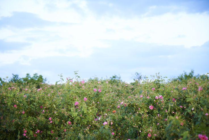 音楽と写真で楽しむコンテンツを公開中 http://www.dicila.co.jp/special/