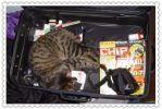 01.02.2013 Kyoto Eki, Heian Jingu, Ginkakuji, Yasaka Jinja & Shopping