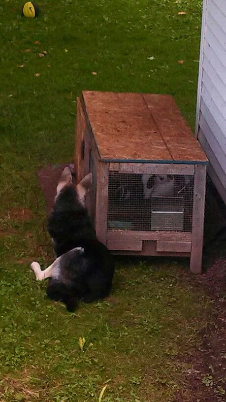 Build Your Own Rabbit Cage Woodworking Projects Amp Plans