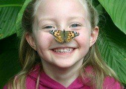 Kids Meet Butterflies at the NHM Butterfly Pavilion - April through September, Tuesday's free