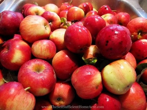 Making applesauce from wild apples