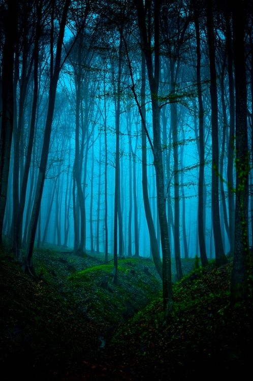 Peaceful.....: Colors Pallets, Dreams Places, Magic Forests, Enchanted Forests, Blue Lights, Blue Green, Dark Wood, Dark Forests, Deep Blue