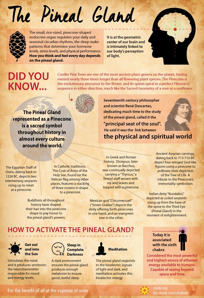 "Divine Spark:  The #Pineal #Gland ~ It is considered by many to be our biological Third Eye, the ""Seat of the Soul,"" the ""Epicenter of Enlightenment,"" and its sacred symbol throughout history, in cultures around the world, has been the Pinecone."