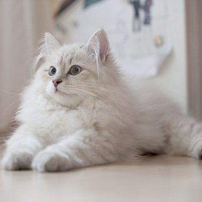 Seltene Kätzchen zu verkaufen in meiner Nähe, wo niedliche Tiere GIF küssen   – Kute Kittens