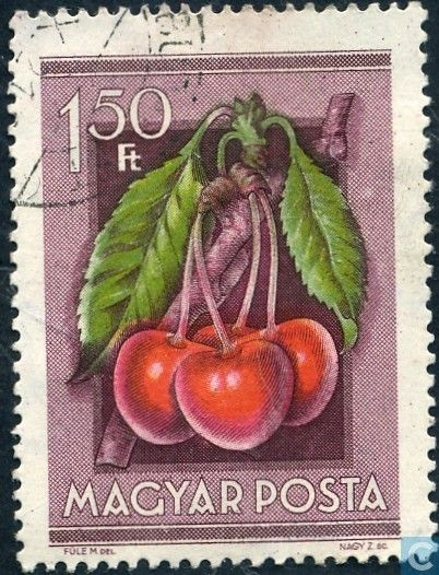 Cherries - Fruits . Postage stamp printed in Hungary ,circa 1954