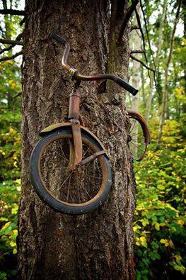 Fotografia mostra un albero che è cresciuto intorno a una bicicletta lasciata da un ragazzo sulla Vashon Island di Washington .  Una famiglia aveva gettato una solida pretesa sulla reale storia della bicicletta sull'albero. Due generazioni concordano sul fatto che la bicicletta apparteneva a don Puz, che nel 1954 ha lasciato la sua bicicletta nel bosco, dimenticato e mai tornato a cercarla.