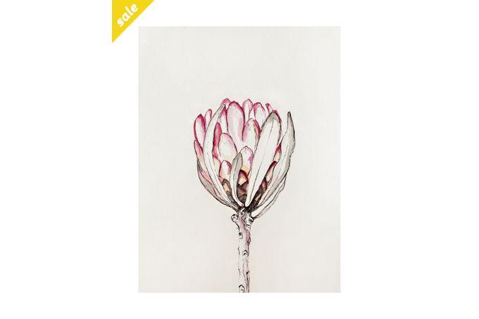 Botanical Illustration 04 – 'Protea Eximia' by Abundance Designs for sale on hellopretty.co.za