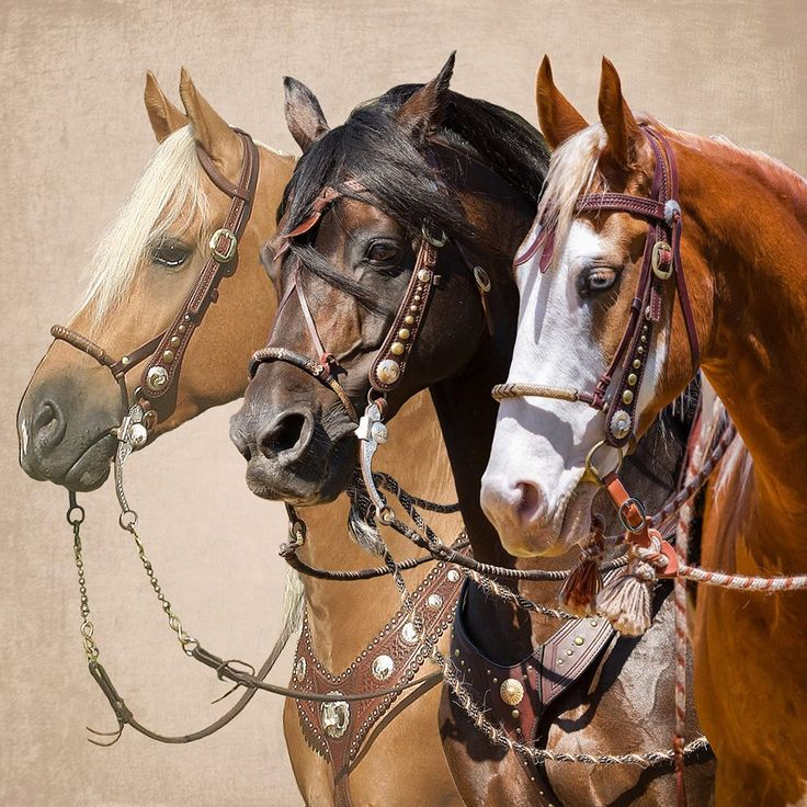 Palomino, Bay, and Chestnut; These Horses are Really Something to Look at.                                                                                                                                                                                 Mehr