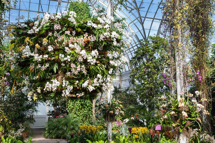 The orchid show chandeliers nybg enid a haupt conservatory the orchid show chandeliers nybg enid a haupt conservatory garland wreath planters ideas pinterest plants mozeypictures Gallery