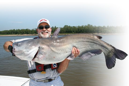 How To Catch Big River Blue Catfish