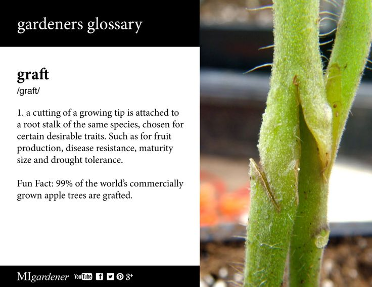 10 best gardeners glossary images on pinterest edible garden graft gardeners glossary what is a graft why are they used use the fandeluxe Gallery