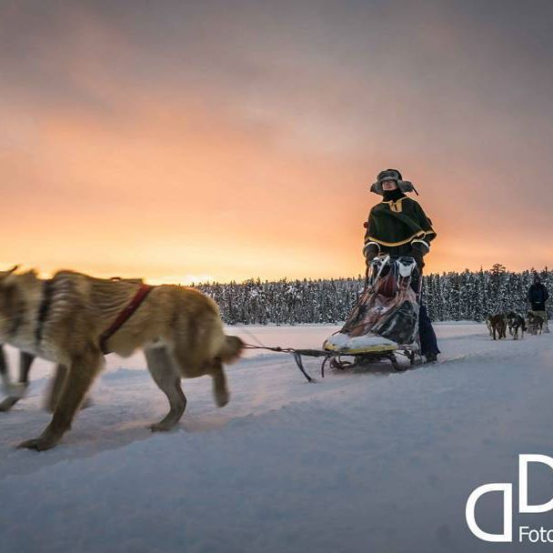 "Dog sledding, ""Torassieppi cottages & safaris"", Finnland #finnland #lappland #winter #cuteanimals #sledgedog #dogsledding #scandinavian #polar #snow #dogs #dogsofinstagram #schlittenhund #mushing #finland #iwishiwasinfinland"
