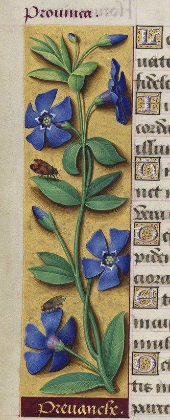 Grandes Heures d'Anne de Bretagne. Type : manuscrit Langue : Latin Format : 238…