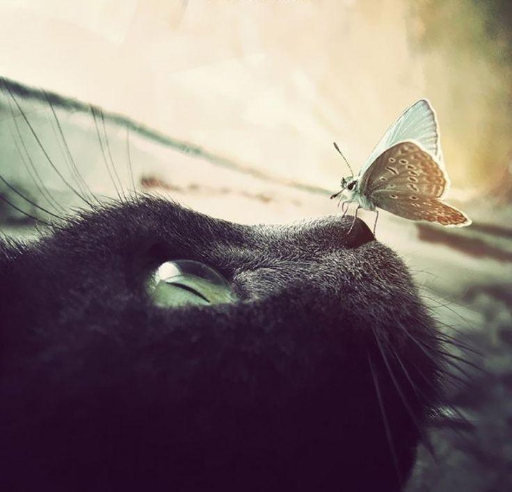 Сказочные фотографии животных с бабочками