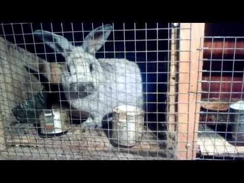 Супер корм для кроликов и не только - YouTube