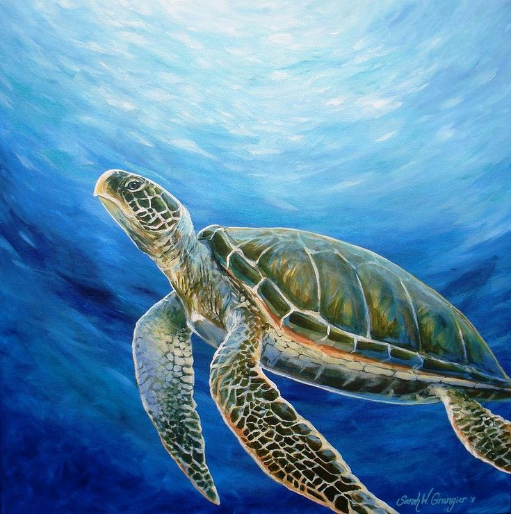 Sea Turtle Painting by Sarah Grangier - Sea Turtle Fine Art Prints and Posters for Sale