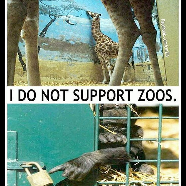 NEVER.  Not in support of financing animal cruelty and torture.