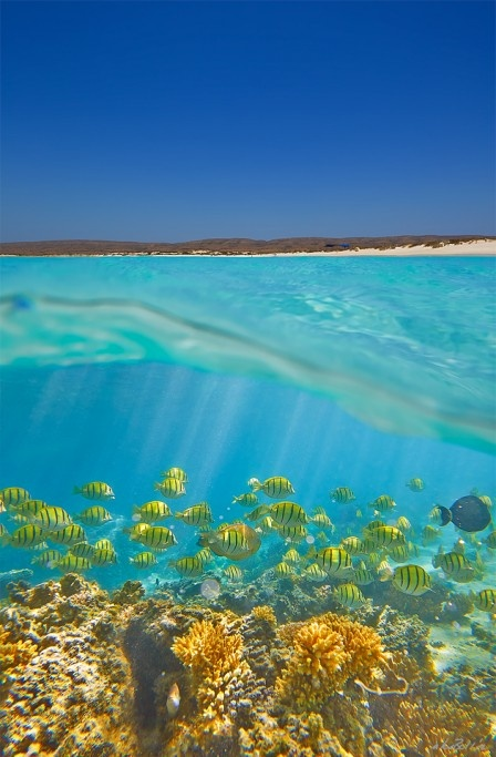 Ningaloo Reef is a fringing coral reef located off the west coast of Australia