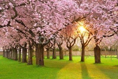 mata magnetyczna Faszinierende Frühlingsszene bei Abendsonne