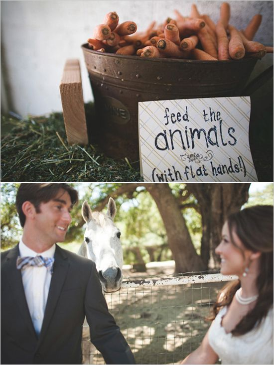 farm animals at wedding