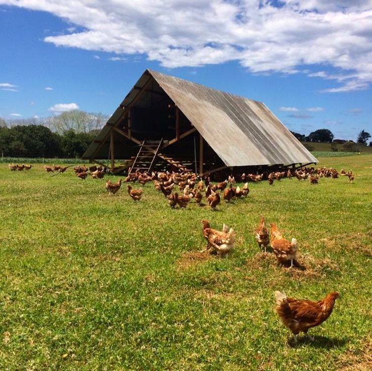 The Farm @ Byron Bay #agratourism