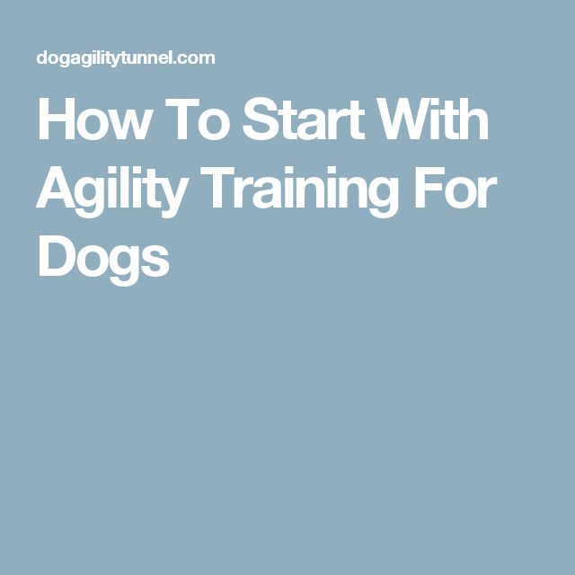 How To Start With Agility Training For Dogs