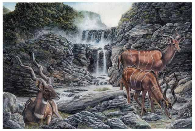 Two types of Kudu Antelopes in a rocky canyon