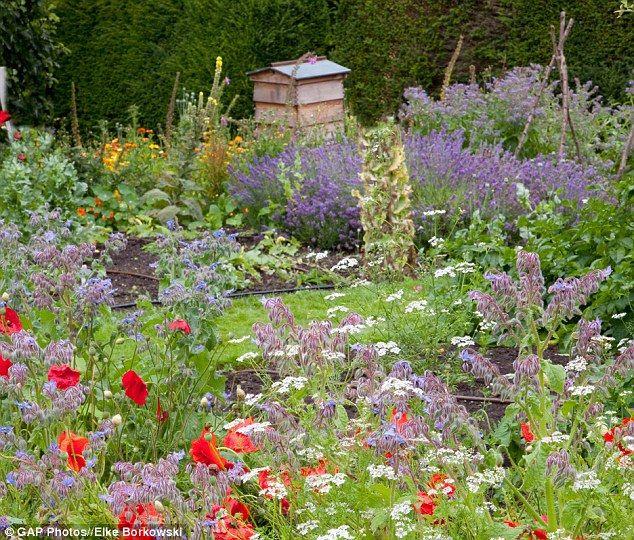 17 best images about mums wildflower garden ideas on for Wildflower garden designs