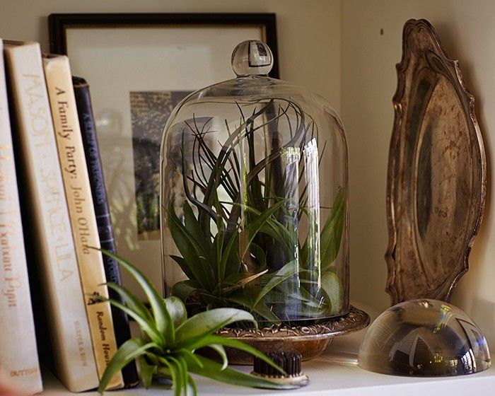 How To Display House Plants   Google Search