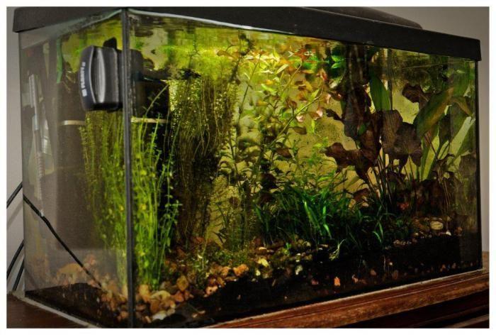 Zadbane akwarium wizytówką naszego domu