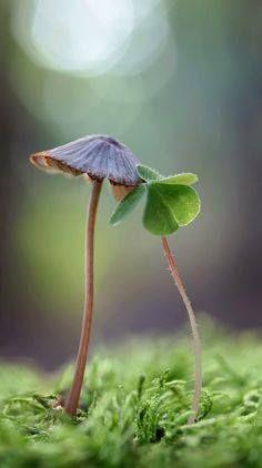 あなたは一番好きな仕事を やっているだろうか? もしやってなければ、 今すぐ手を打つことだ! 自分の仕事が好きでなければ、 本当の成功は望めない。 多くの成功者は 何度も他の仕事で失敗を重ねて、 やっと自分のやりたい仕事を見出している。   デール・カーネギー